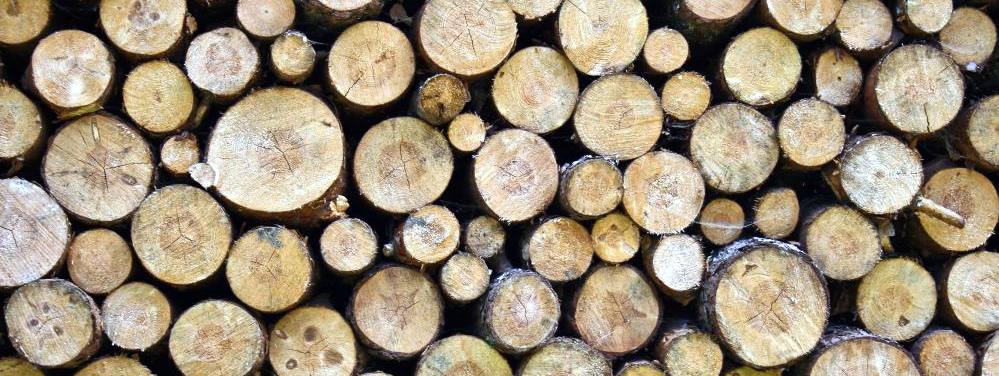 Seasoned Wood Logs